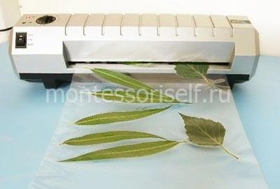 Ламинируем листья