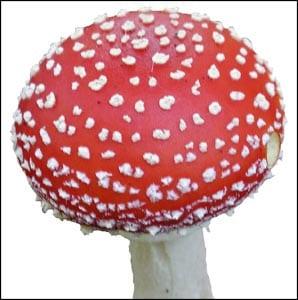 Картинка гриб мухомор для детей