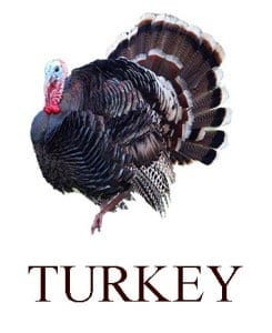 Turkey in English for kids