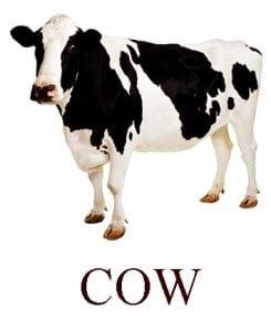 Корова на английском для детей