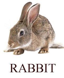Кролик на английском для детей