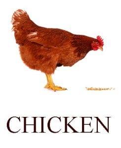 Курица на английском для детей