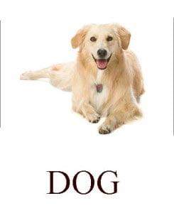 Собака на английском для детей