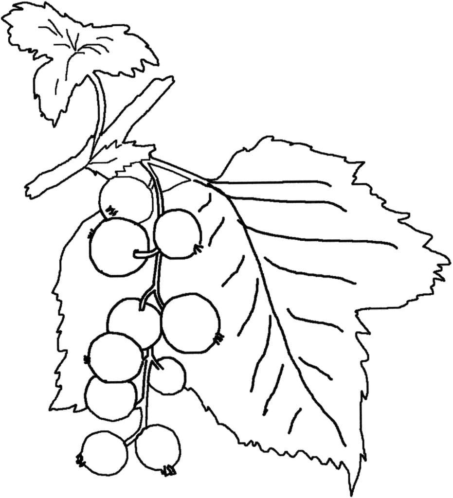 Раскраски ягодами