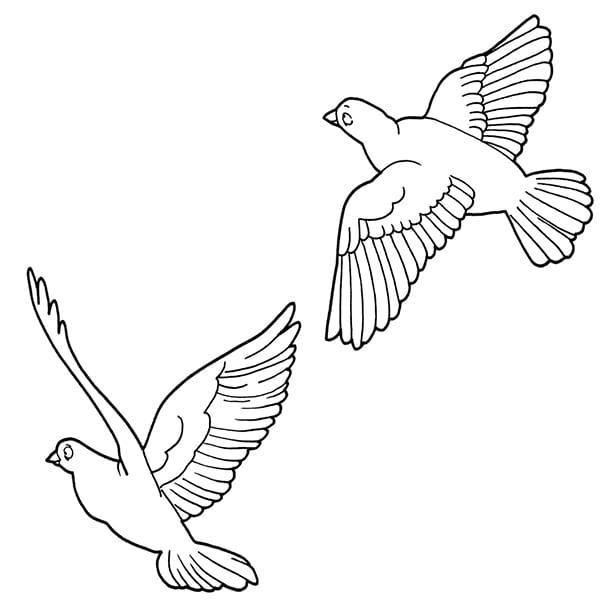 Раскраска прилетели птицы
