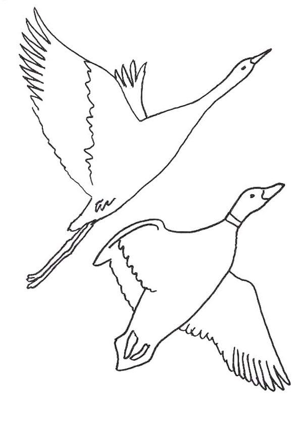 Перелетные птицы 1