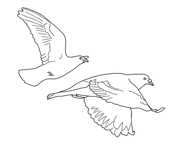 Летят голуби