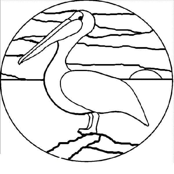 Пеликан в круге