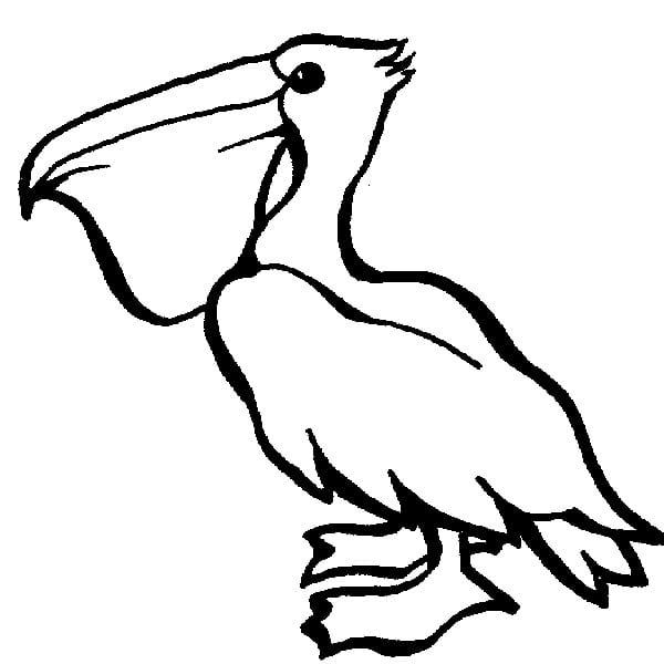 Пеликан 1