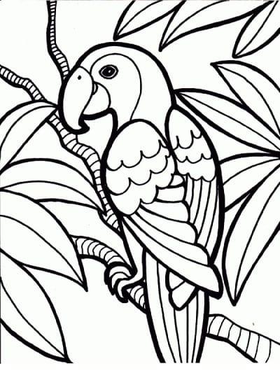 Раскраска экзотический попугай