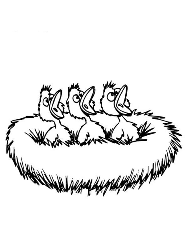 Baby birds in nest drawing