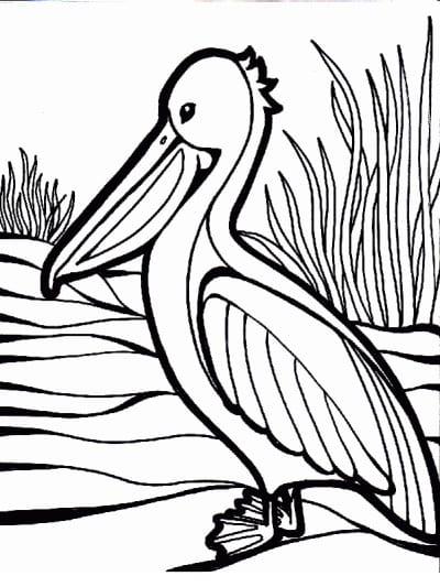 Раскраска пеликан