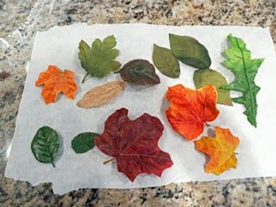 Собираем самые красивые листья