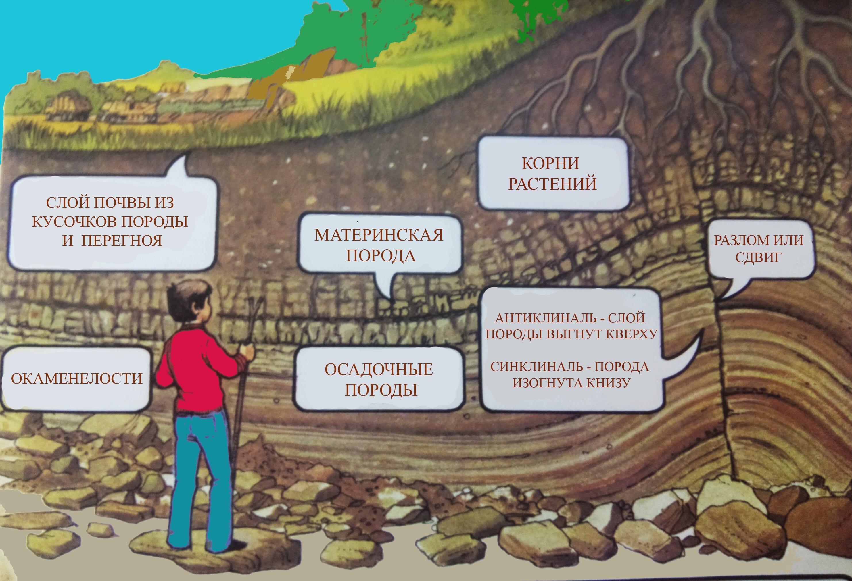 Горные породы и почвы на срезе оврага