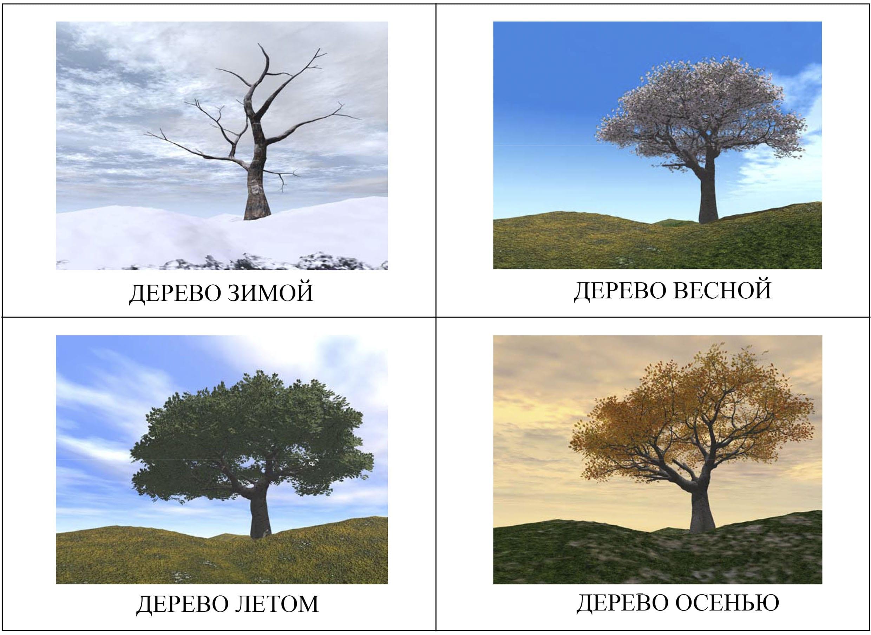 Дерево в разные времена года