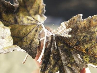 Веревка, приклеенная к листьям