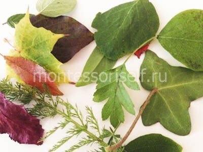 Листья для поделки
