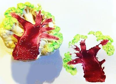 Дерево из цветной капусты