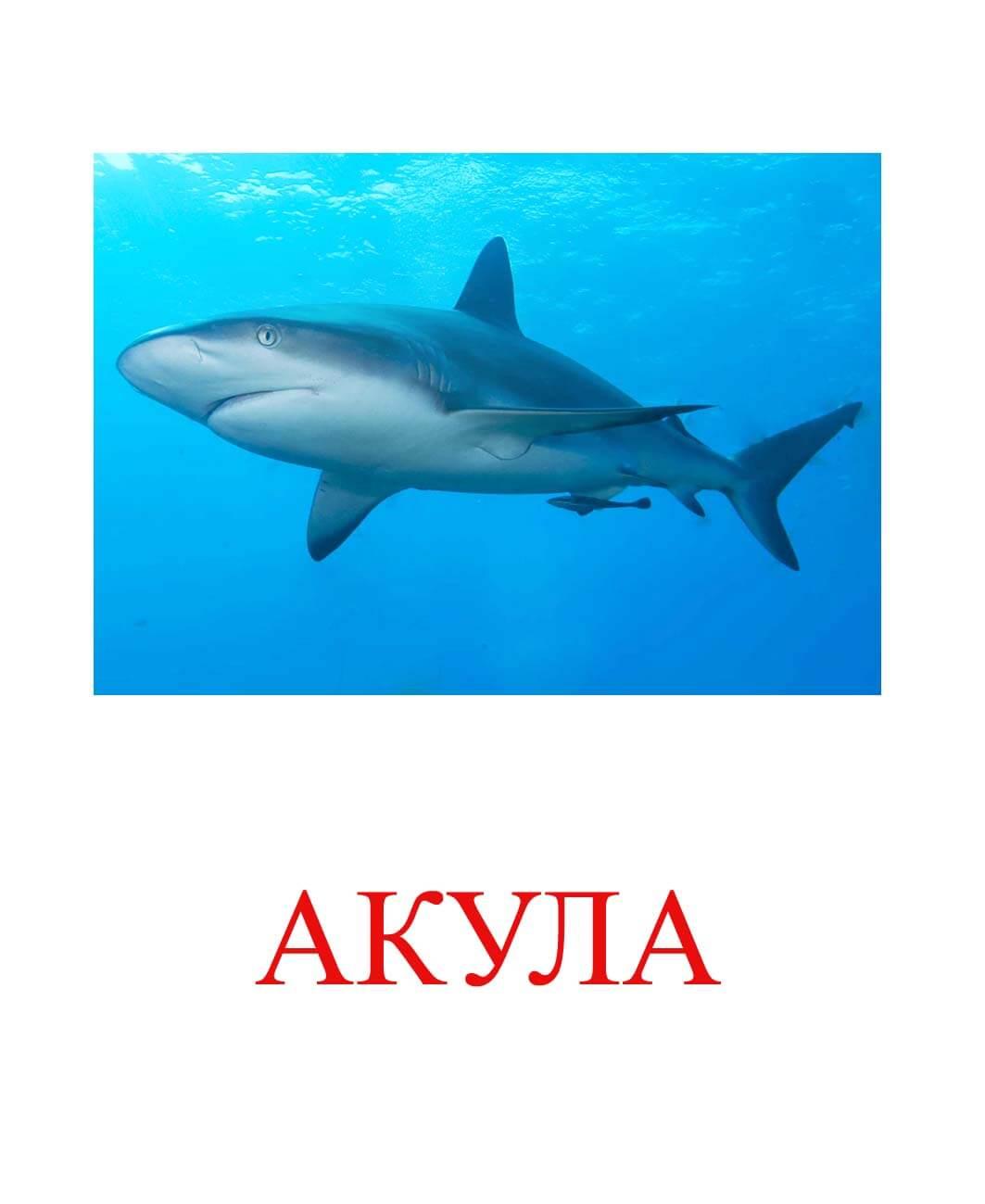 Акула картинка для детей