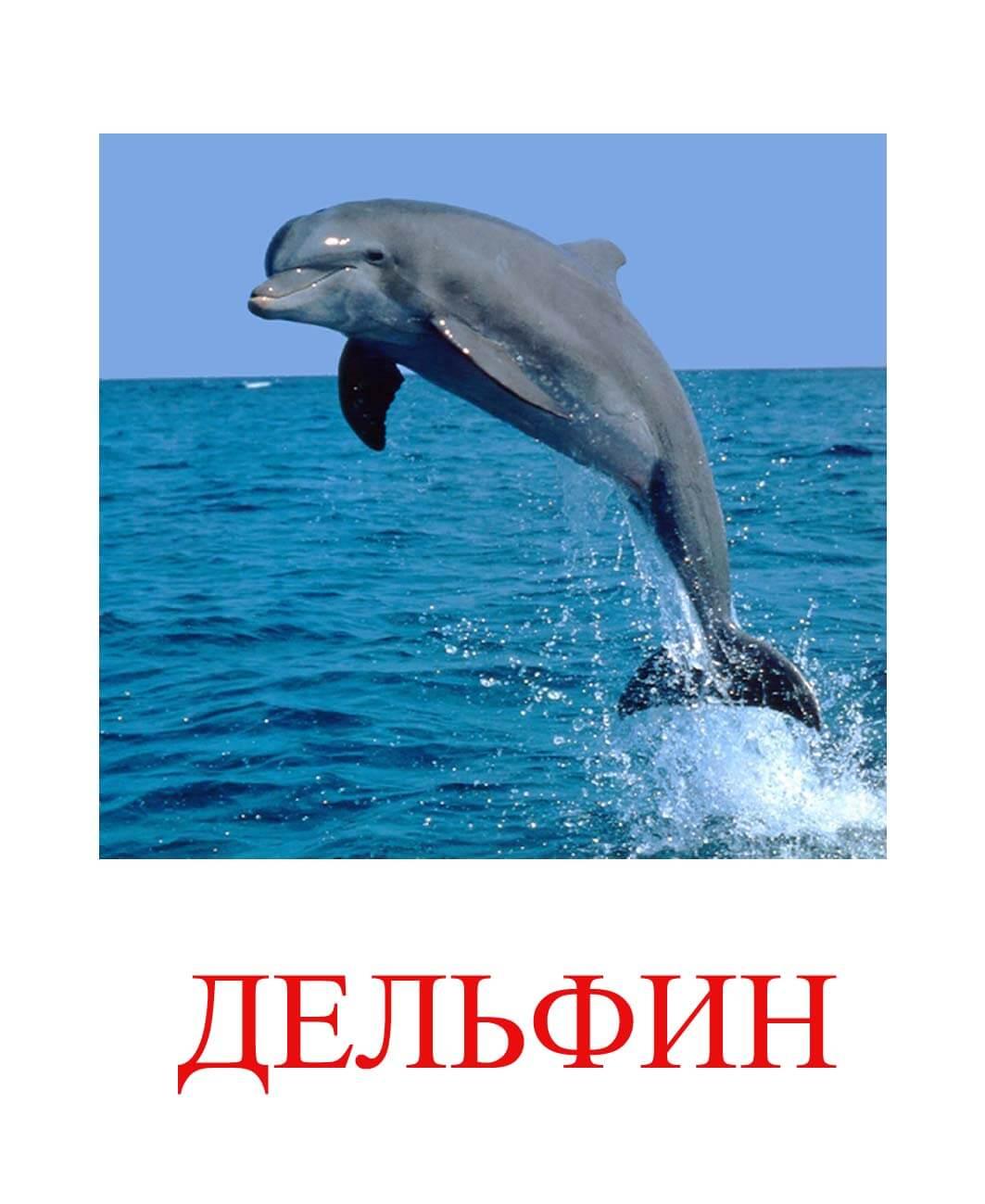 Дельфин картинка для детей