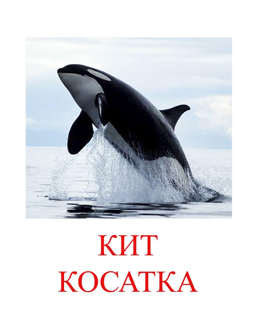 кит косатка картинки для детей