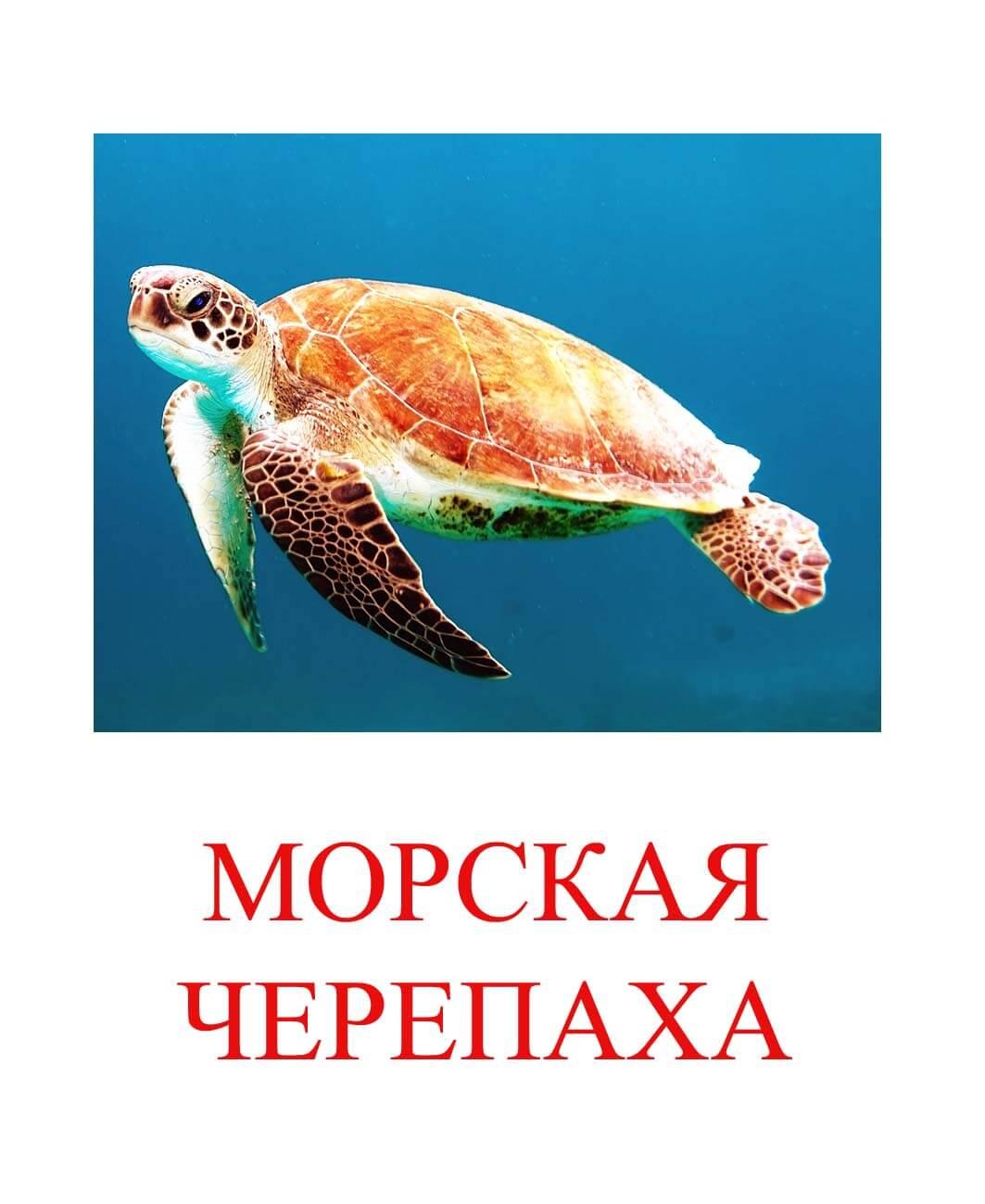 морская черепаха картинки для детей