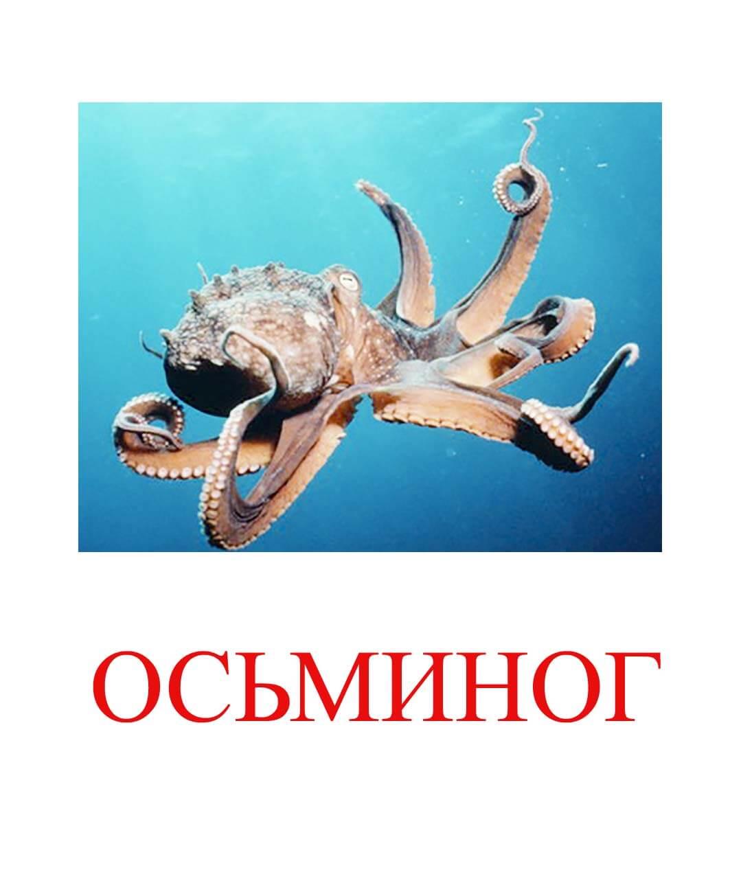 осьминог картинки для детей