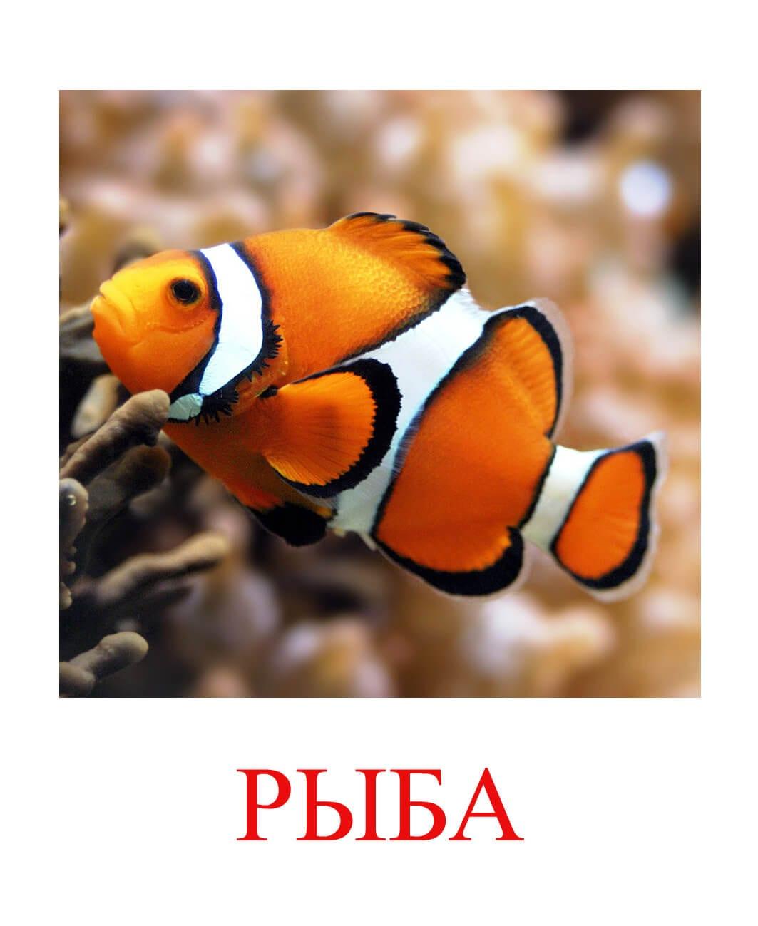 рыба картинка для детей