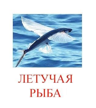 Летучая рыба картинка для детей
