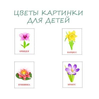 Цветы картинки для детей. Карточки с названиями