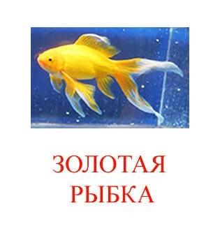 Золотая рыбка картинка для детей