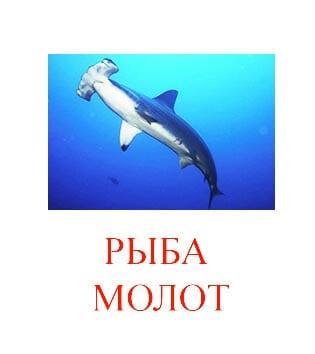 Рыба молот картинка для детей