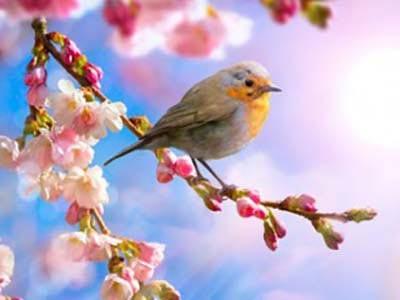 Весенние птички фото 4