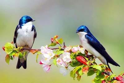 Весенние птички фото 3