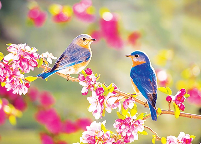Весенние птички фото 2