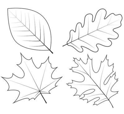Лист клена, калины, дуба и березы