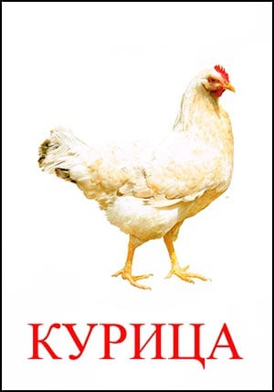 Курица картинка для детей