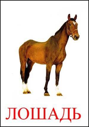 Лошадь картинка для детей