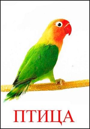 птица картинка для детей