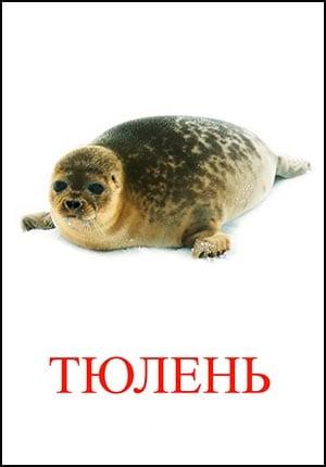 тюлень картинка для детей