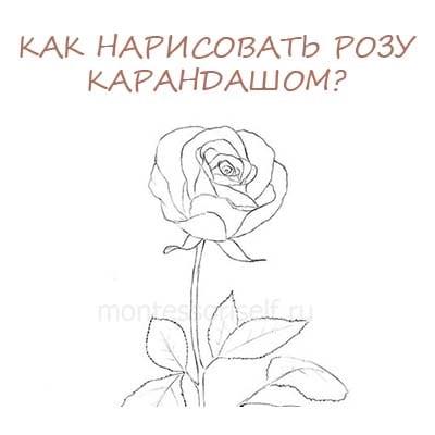 Как нарисовать розу карандашом: поэтапно для начинающих