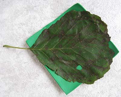 Прикладываем на разогретый фоамиран листик