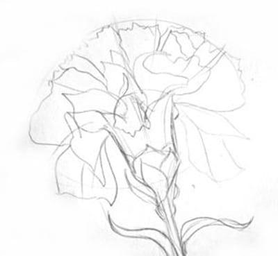 Лепестки цветка