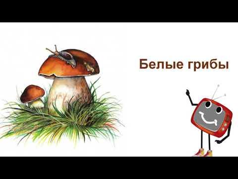Съедобные грибы. Окружающий мир для детей.