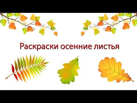 Раскраски осенние листья Раскраски для детей