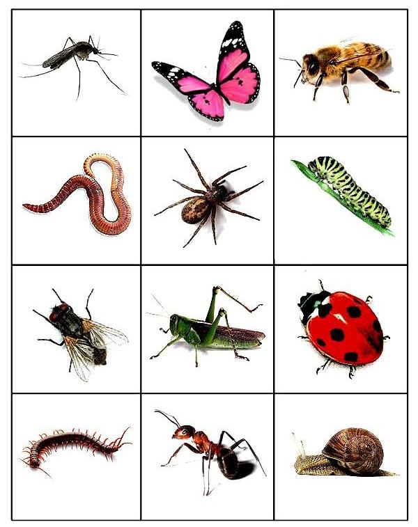 Насекомые (комар, бабочка, пчела, червь, паук, гусеница, муха, кузнечик, бабочка, сороконожка, муравей, улитка)