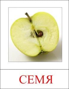 картинка семя