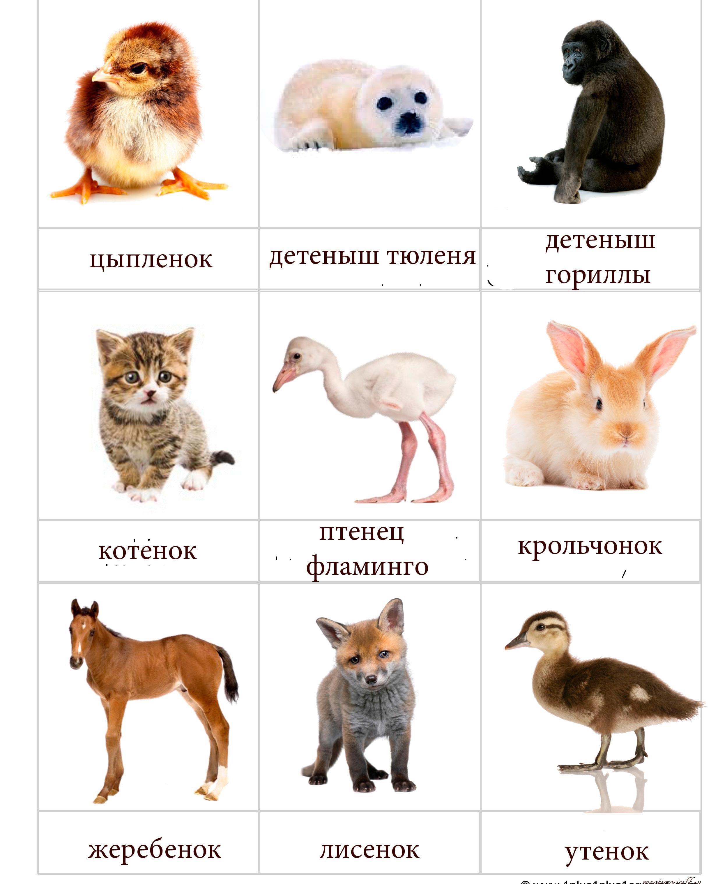 Картинки с детенышами животных 2