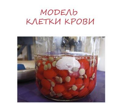 модель клетки крови
