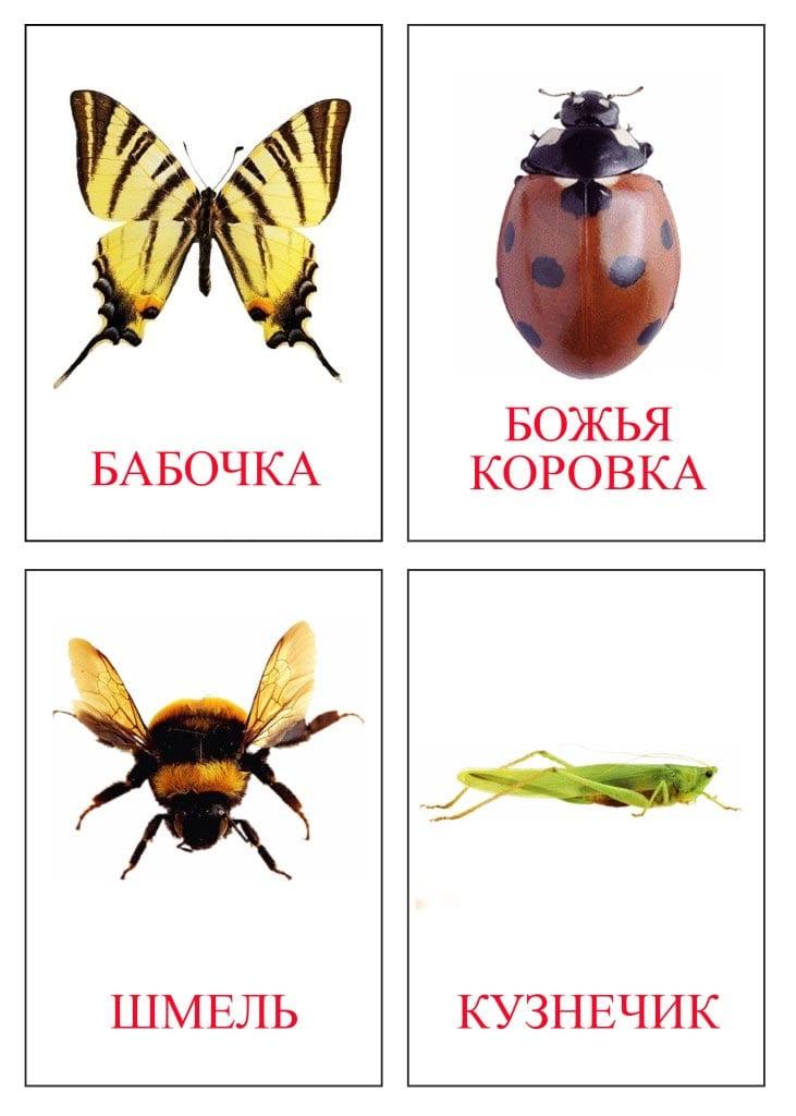 рисунки насекомых 1